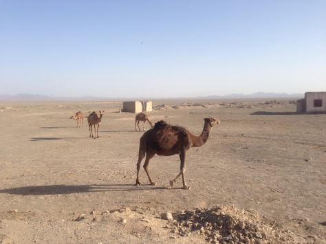 When we started to see Camels we knew the conditions were getting harsh!