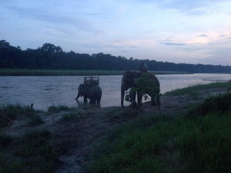 Elephants chilling out in the river after an amazing ride through the Chitwan National Park.