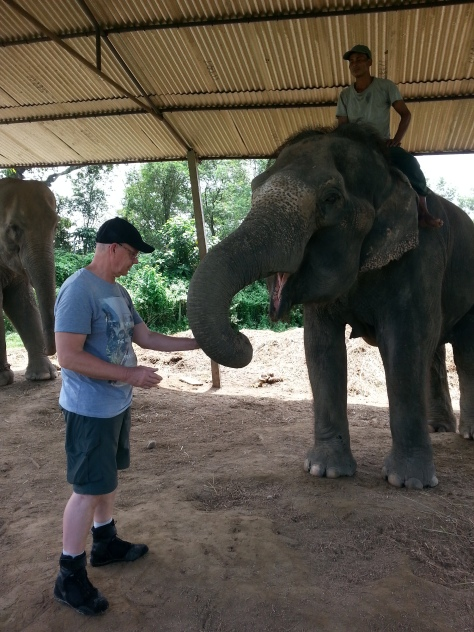 Steve getting to know the elephant